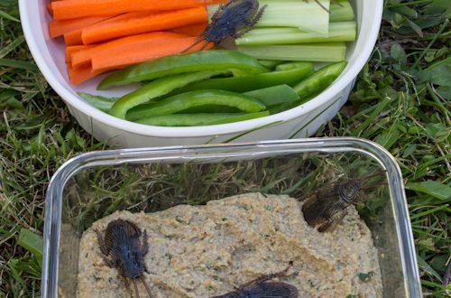 Roasted Roach Dip (Walnut Dip with Garlic)