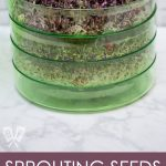 3/4 view of a vertical style seed sprouting kit.
